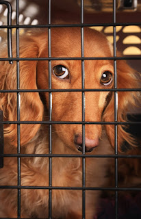 Puppy feeling bored and barks in his crate at night