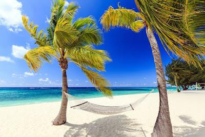 Hamac et cocotiers face à la plage de sable blanc