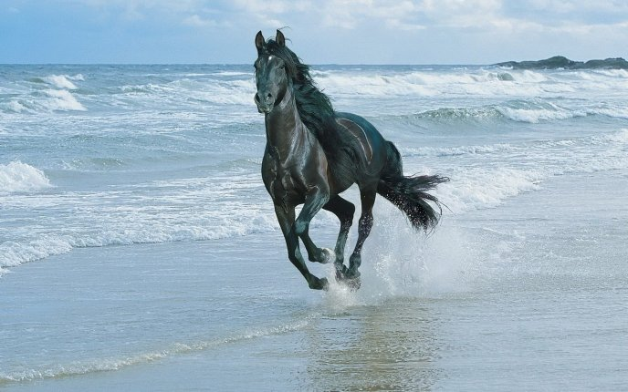 Beautiful White Horse Wallpaper Hd Horse Horse Wallpapers Horse Pictures Horse Photos