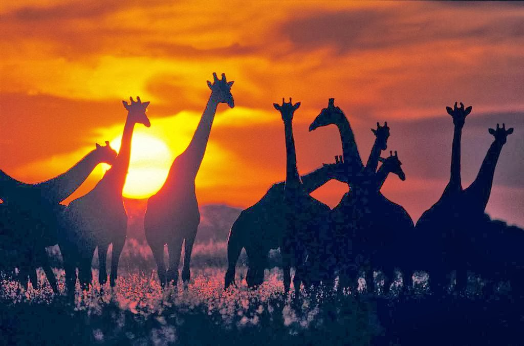 afrikas beste nationalparks