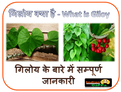 गिलोय क्या है | What is Giloy | Giloy In Hindi | Giloy Plant