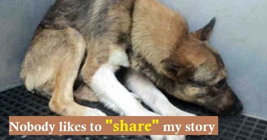 Abused Dog Who Thought He Deserved to Die Is Beautifully Proven Wrong