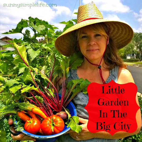 little garden in the big city, urban farm, homegrown, what you can grow in a city garden