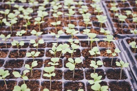 Comment faire pour choisir les Alvéoles de semis?