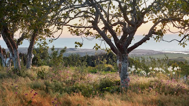 Umberto Pasti. Perdido en el jardín (paraíso) de Rohuna en Marruecos