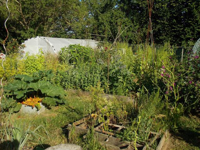 Tour complet de mon jardin en permaculture fin juin 2020 (vidéo)