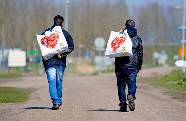 هولندا .. قرار جديد بتخفيض المساعدة القانونية لللاجئين في هولندا