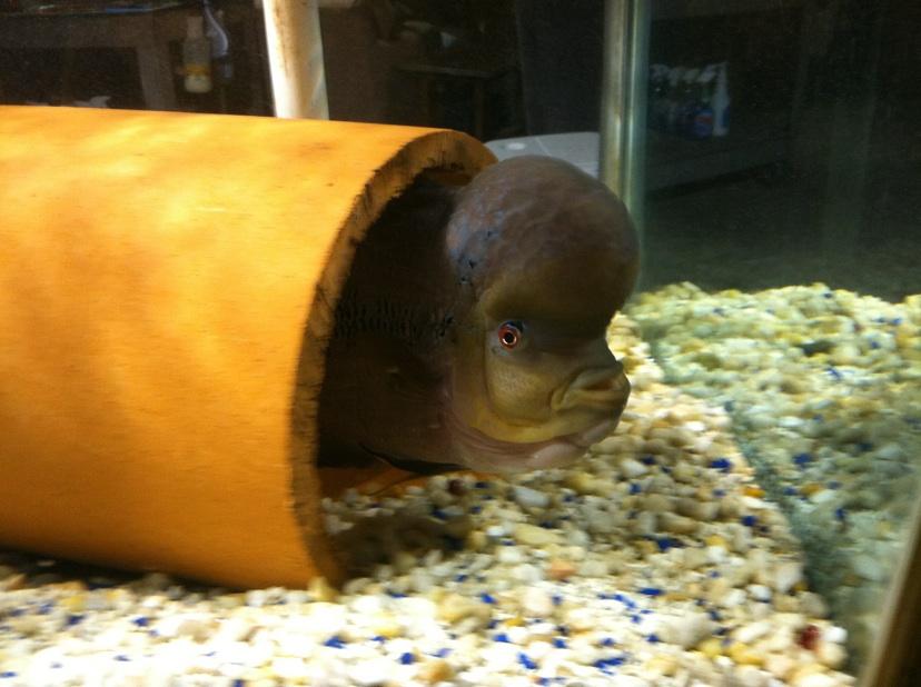 Giant aquariums 300 gallon aquarium 700 dunn nc for Craigslist fish tank