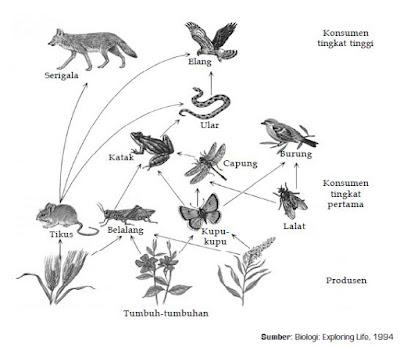 Proses Rantai Makanan , Jaringan Makanan,  Piramida Ekologi dan Daur Biogeokimia dalam Ekosistem