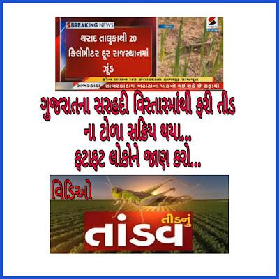 Tid news in Gujarat