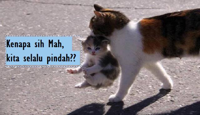 5 Alasan Kenapa Induk Kucing Memindahkan Anaknya setelah Melahirkan dan Solusinya