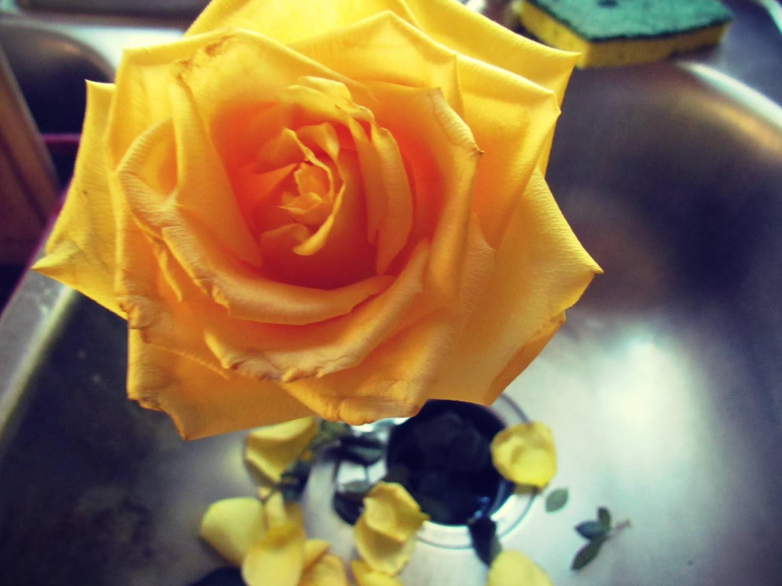 A yellow flower sprouting in a silver metallic sink in a slow home with petals