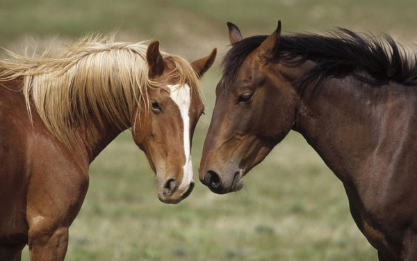 High Definition Pictures of Horses Free Download