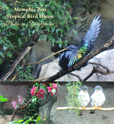 Memphis Zoo Review - Bird House Photos by Cynthia Sylvestermouse