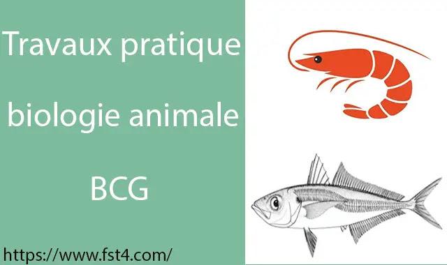 Travaux pratiques de Biologie Animale bcg