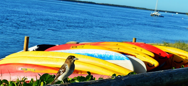 surf skis and bird