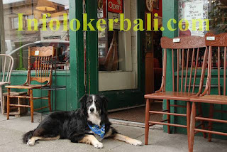 Lowongan Kerja Cleaning Service Dog Walker (Pets Shop)