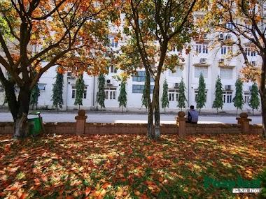 Con đường lá vàng lãng mạn như Hàn Quốc trong khuôn viên Đại học Sư phạm