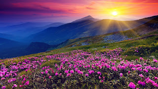 Photo of flowers on the mountain with Sun rising in the horizon. Image courtesy: www.businessinsider.com.