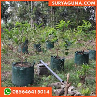 Planter Bag 100 Liter Murah Berkualitas