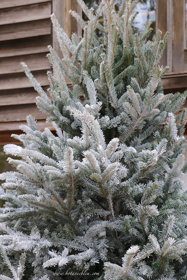 Tips for how NOT to DIY flock a Christmas tree shows the results of using the wrong product