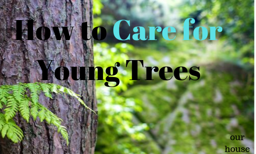 How to Care for Young Trees