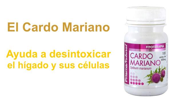 El Cardo Mariano ayuda a desintoxicar el hígado y sus células