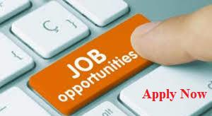 zinroll solution jobs openings