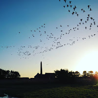Pictures of Ireland: Flock of birds over Wexford Wildfowl Reserve