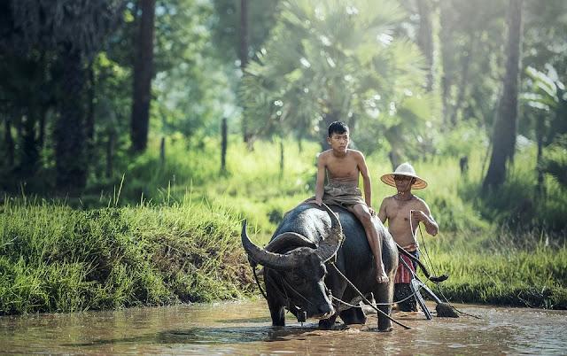 Ketersediaan Lahan dan SDM Berkualitas Kunci Kemajuan Pertanian di Pandeglang