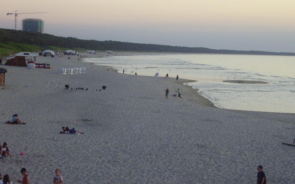 Międzyzdroje plaża dziki warchlaki Morze Bałtyckie