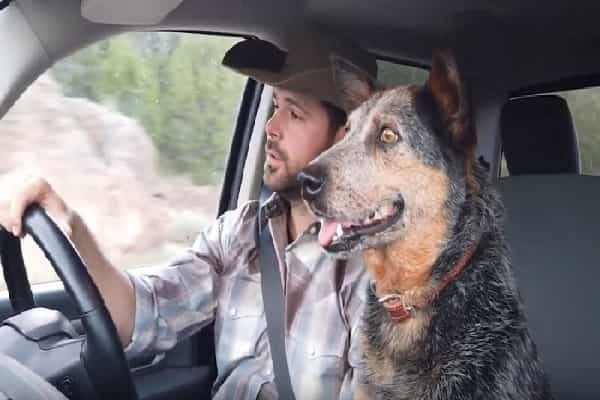 Pet Has 1 Favorite Country Track She Can't Withstand Singing With Owner