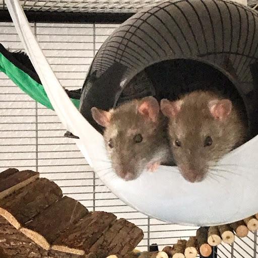 2 Ratten im Sputnik