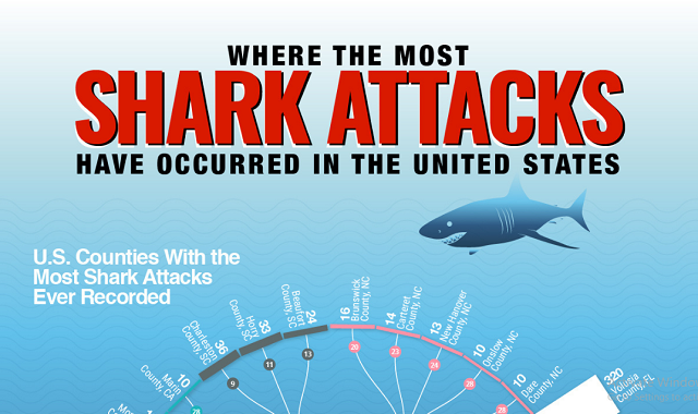 Where the Most Shark Attacks Have Occurred in the United States