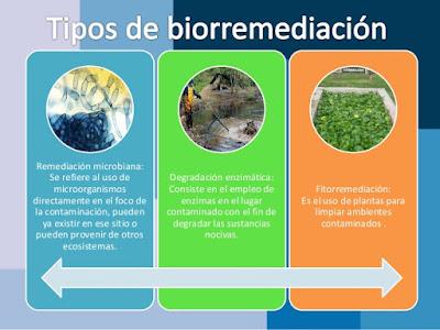 La biorremediación