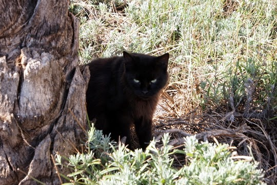 Spanish feral cats