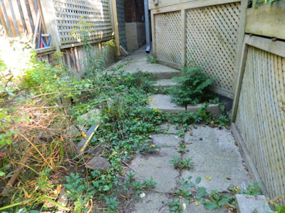 High Park Toronto Back Yard Fall Cleanup Before by Paul Jung Gardening Services--a Toronto Gardening Company