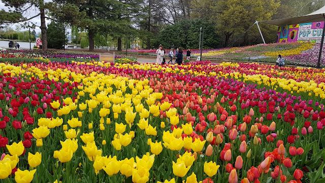 Taman Bunga Floriade Canberra - Australia