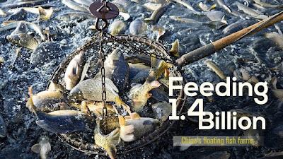 Fish farming guide