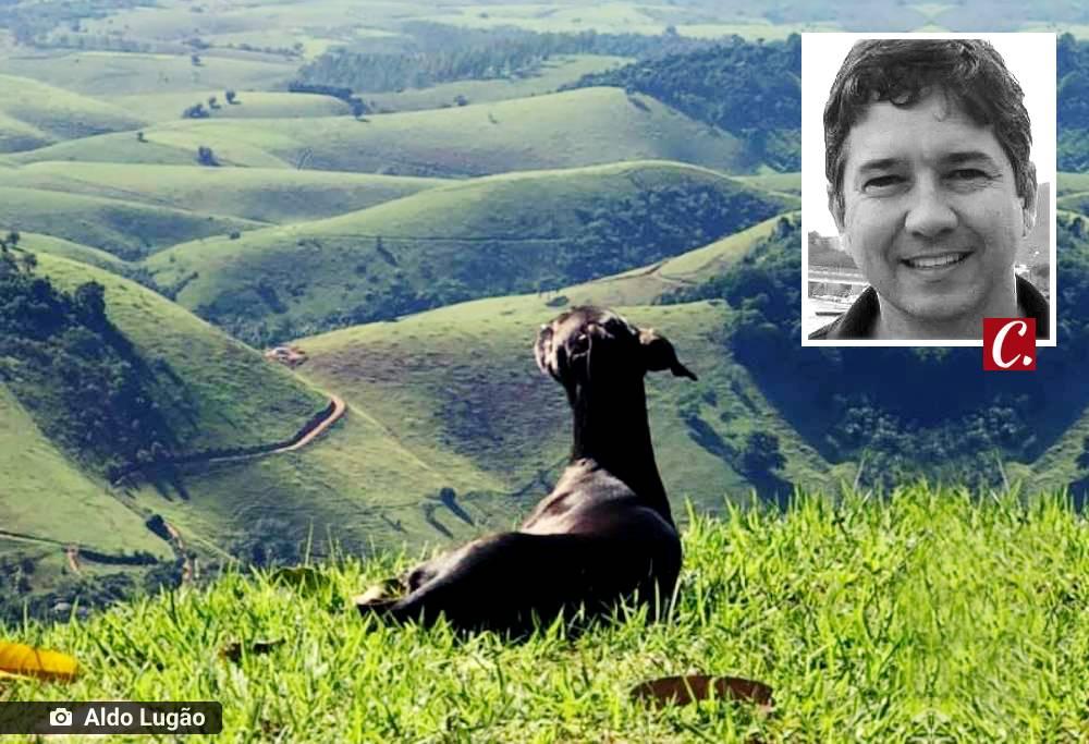 literatura capixaba animal domestico criar cachorro aldo lugao