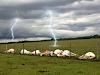 Tragédia: raio mata pecuarista e pelo menos 30 animais no Paraná