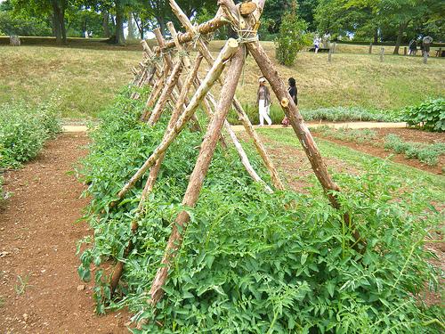 eat live grow paleo square foot garden garden structures. Black Bedroom Furniture Sets. Home Design Ideas