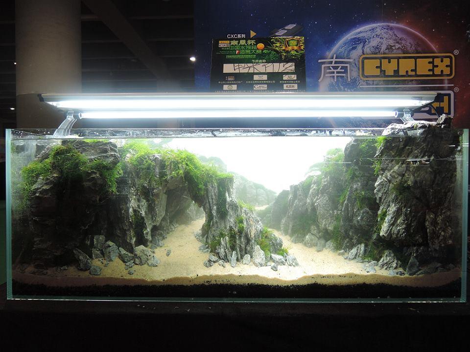 Bố cục thủy sinh núi đá có dòng suối