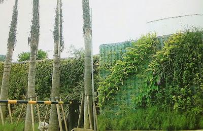 Tukang Taman Vertikal Surabaya | Vertical Garden 13