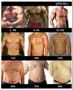 bodyfat percentage for men