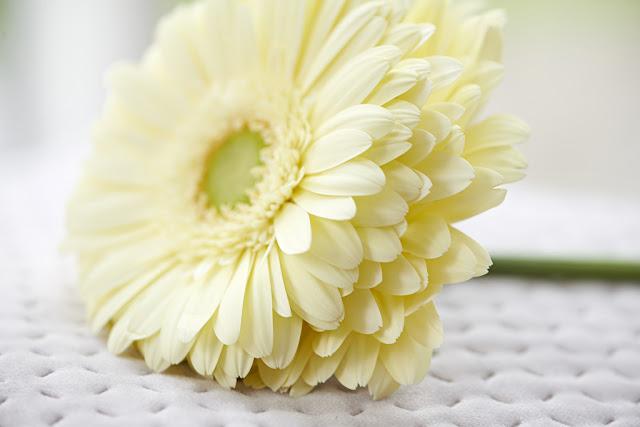 ¿Conoces las flores Bee-Friendly?