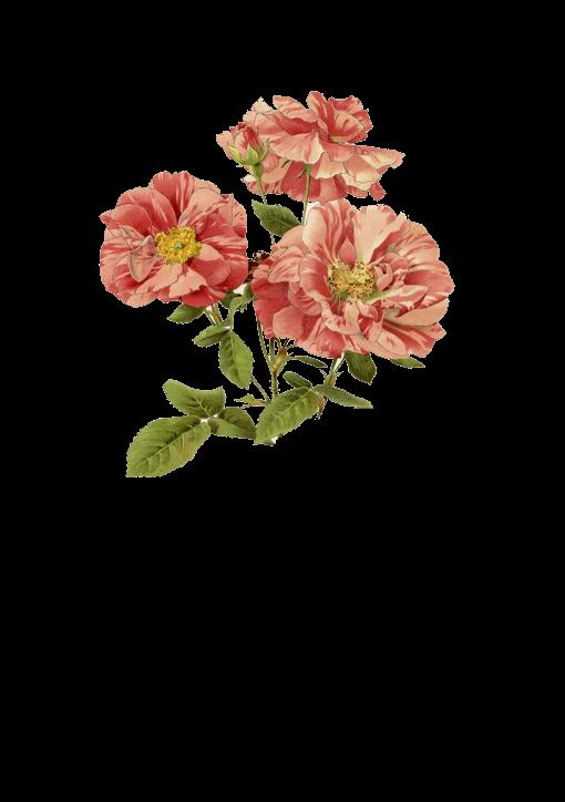 flower by 384321869
