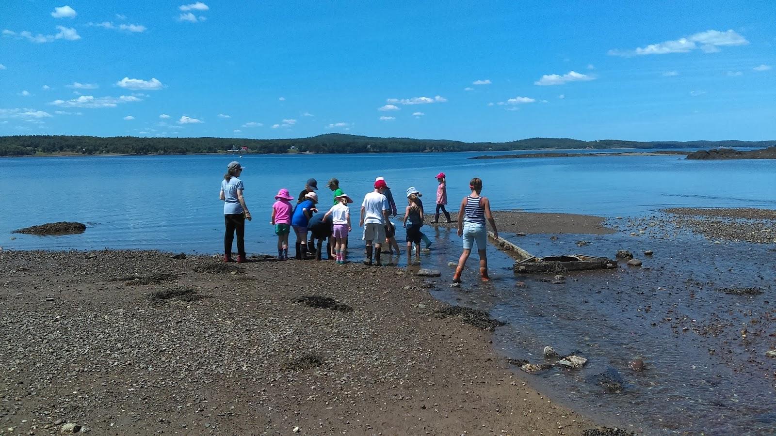 Huntsman Marine Science Centre Young Explorer Marine Biology Week 2017