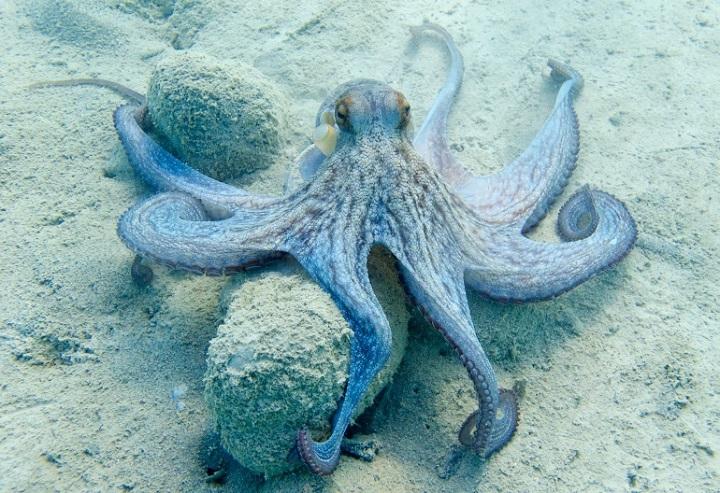 Do octopuses dream?