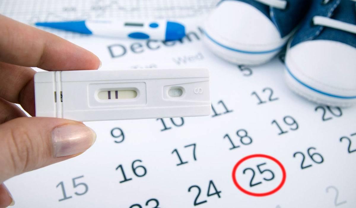 حساب أيام التبويض- الحمل والولادة